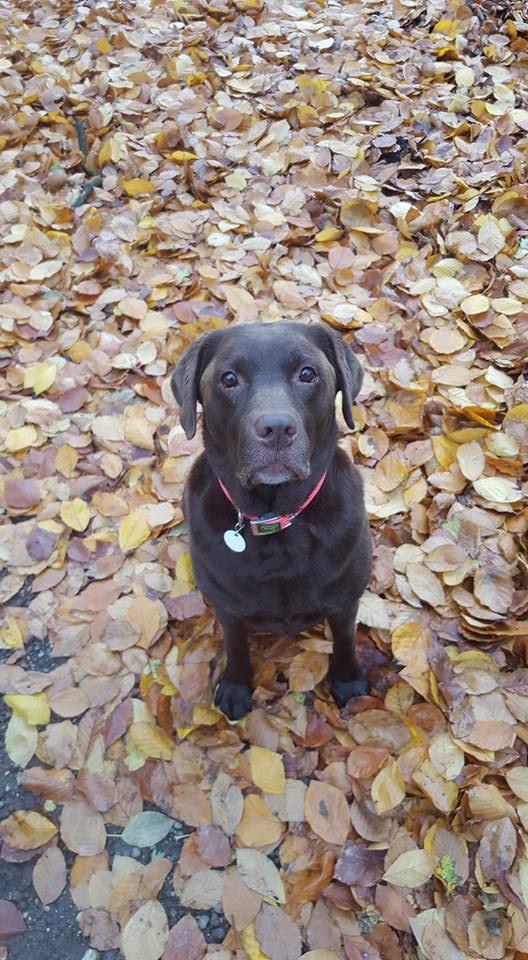 Noah in herfst sfeer tijdens de wandeling met de uitlaatservice.