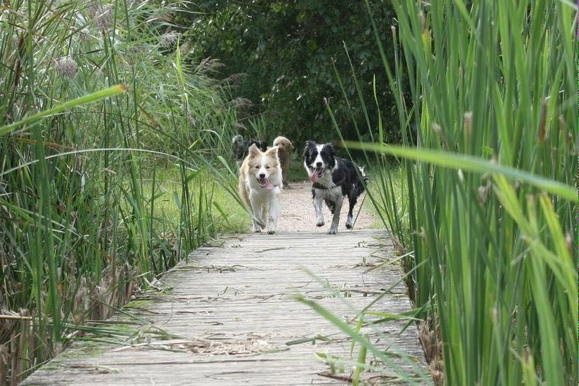 Heerlijke wandeling in het midden delfland.