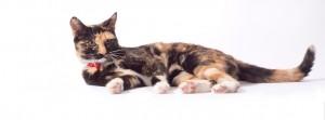Verzorging aan huis | Huisdierenverzorging Alice